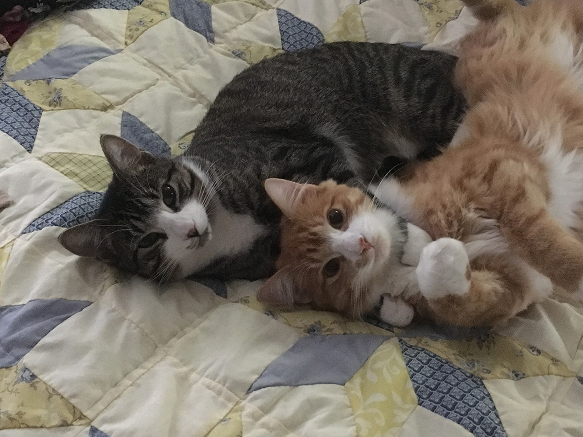 Two cats lay on a bed together.