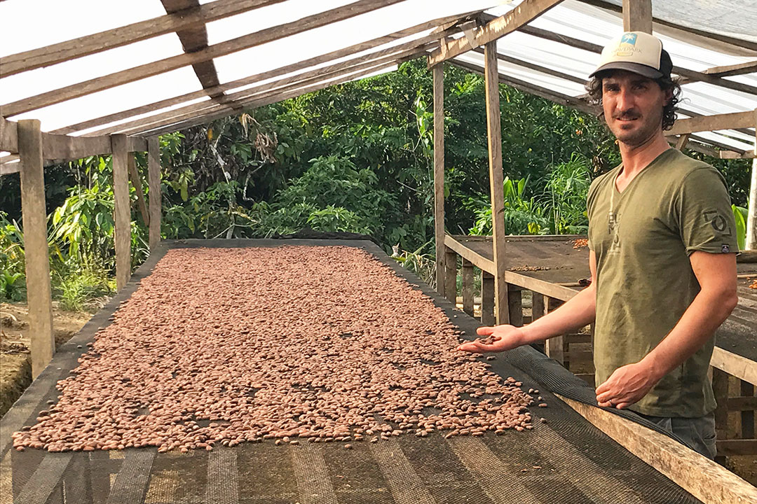 Cacao pods drying on rack.