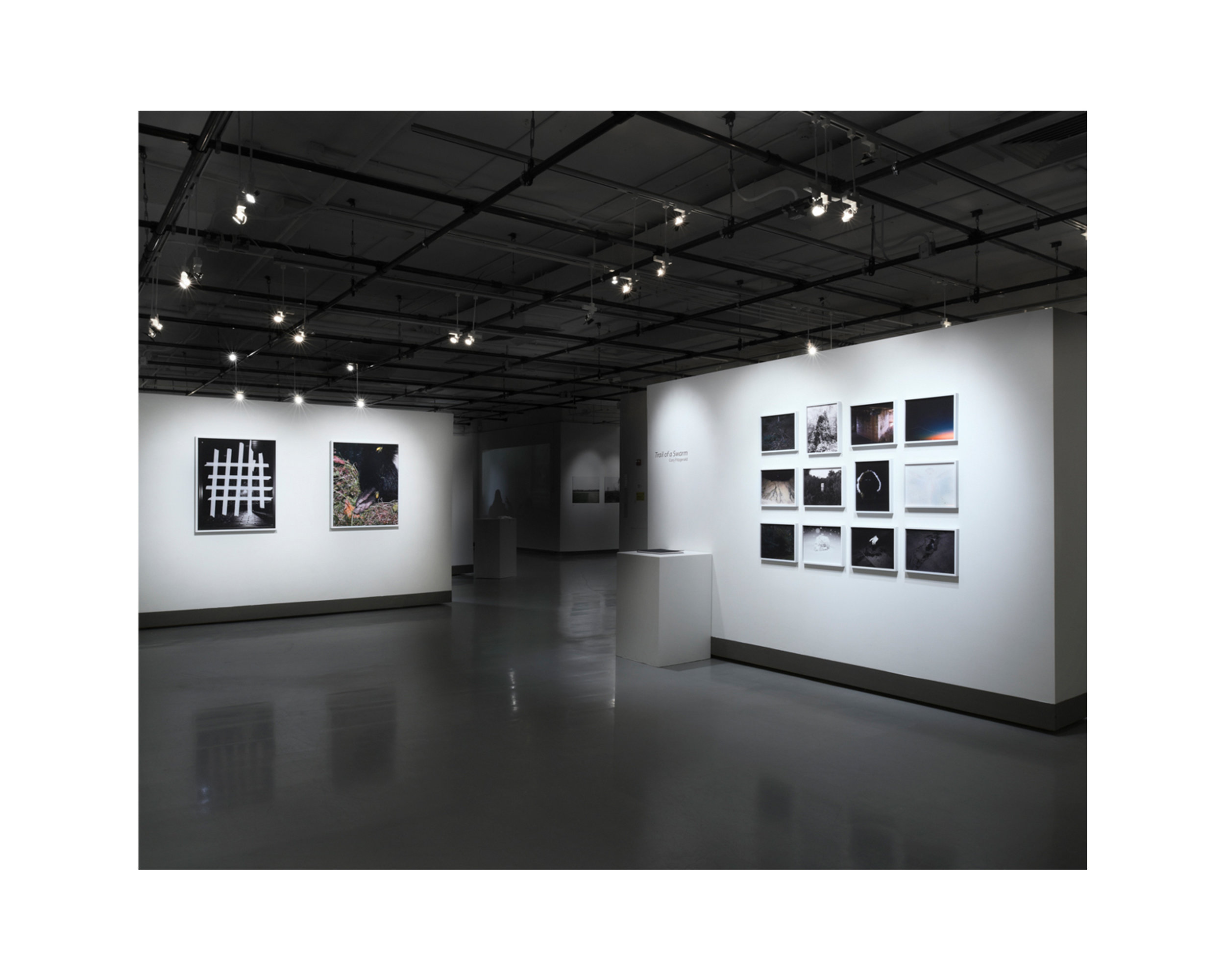 A display of photographs by Cory Fitzgerald