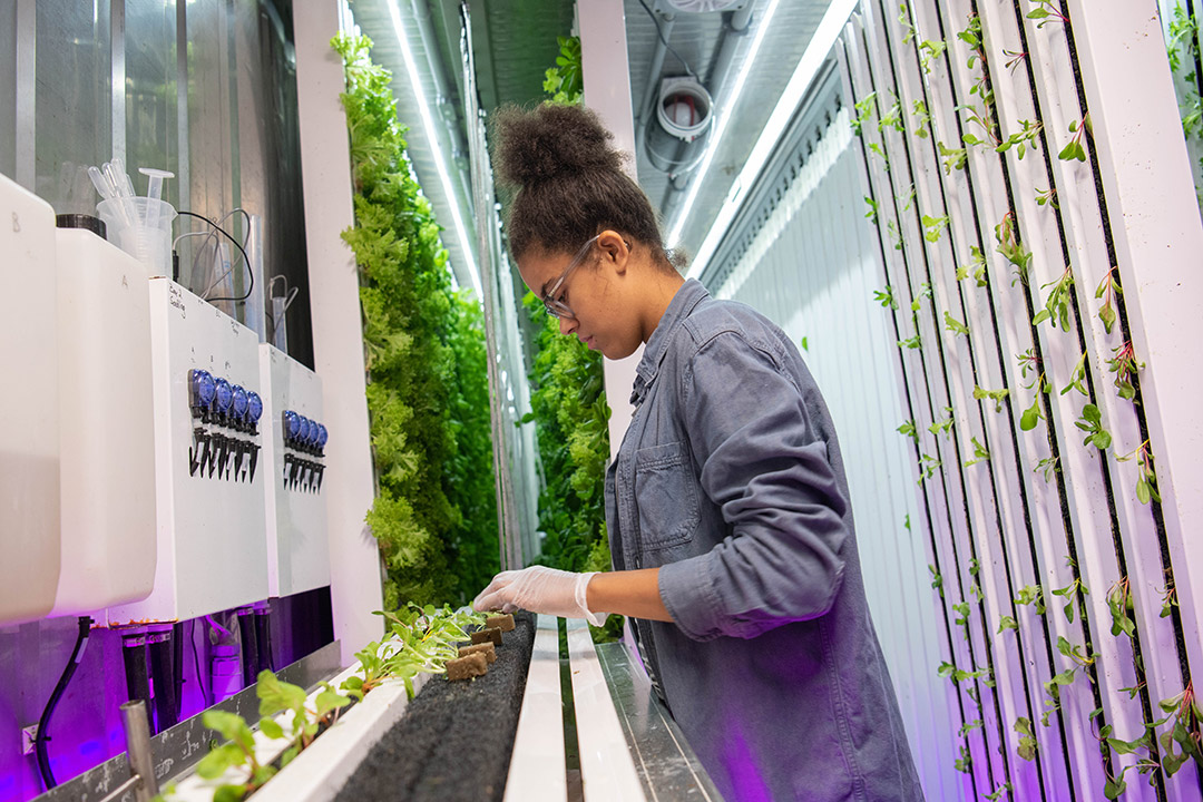 Student stands in hydroponic farm-in-a-box.