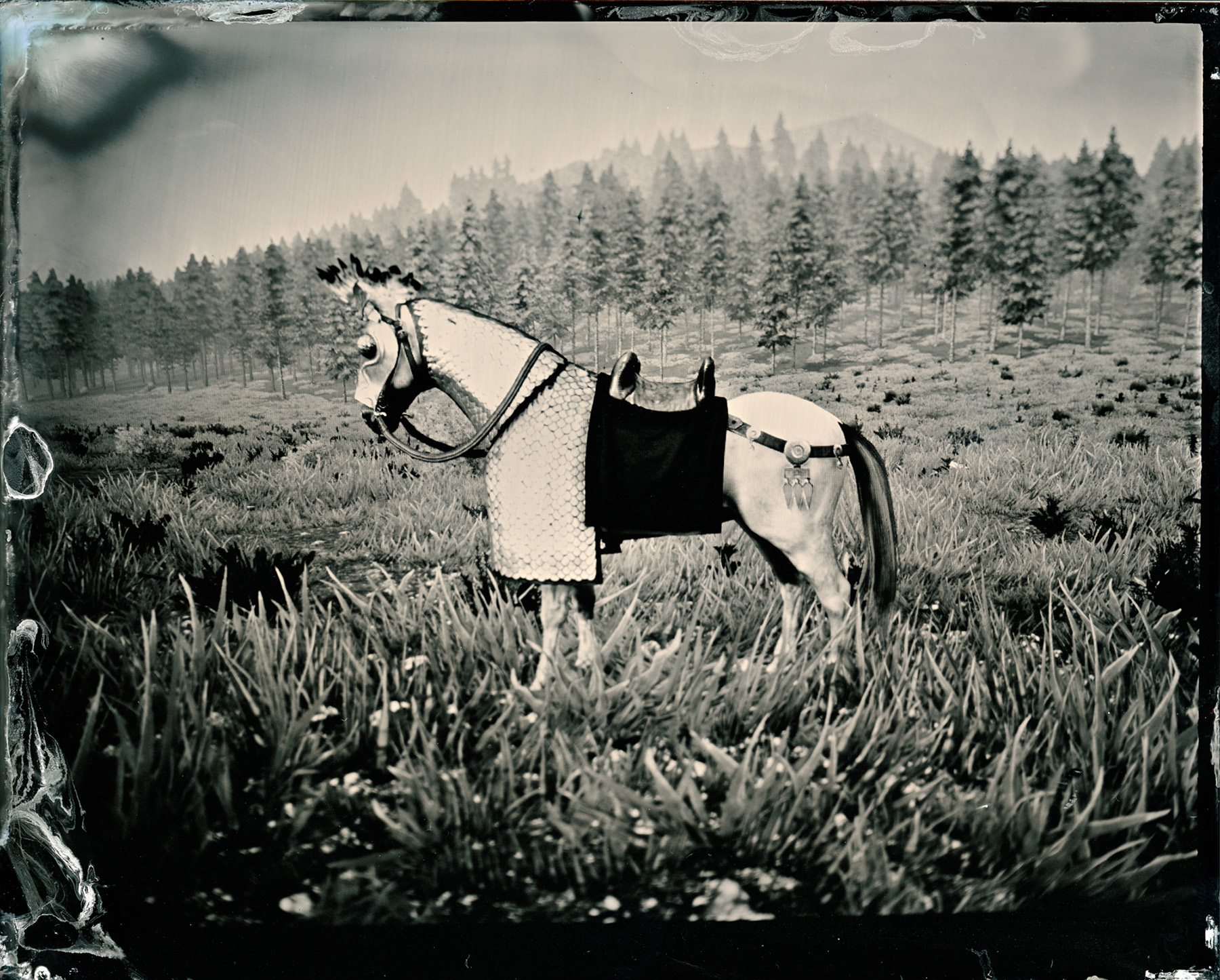 A black-and-white horse in a field.