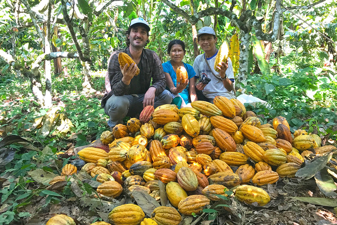Three people sit in forest with pile of cacao pods.