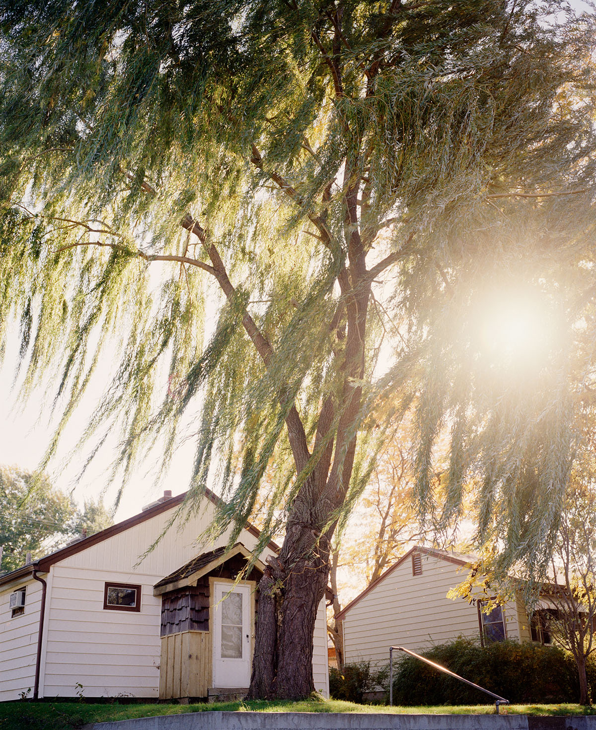 A large tree in front of a house, with the sun trying to peak through the leaves.