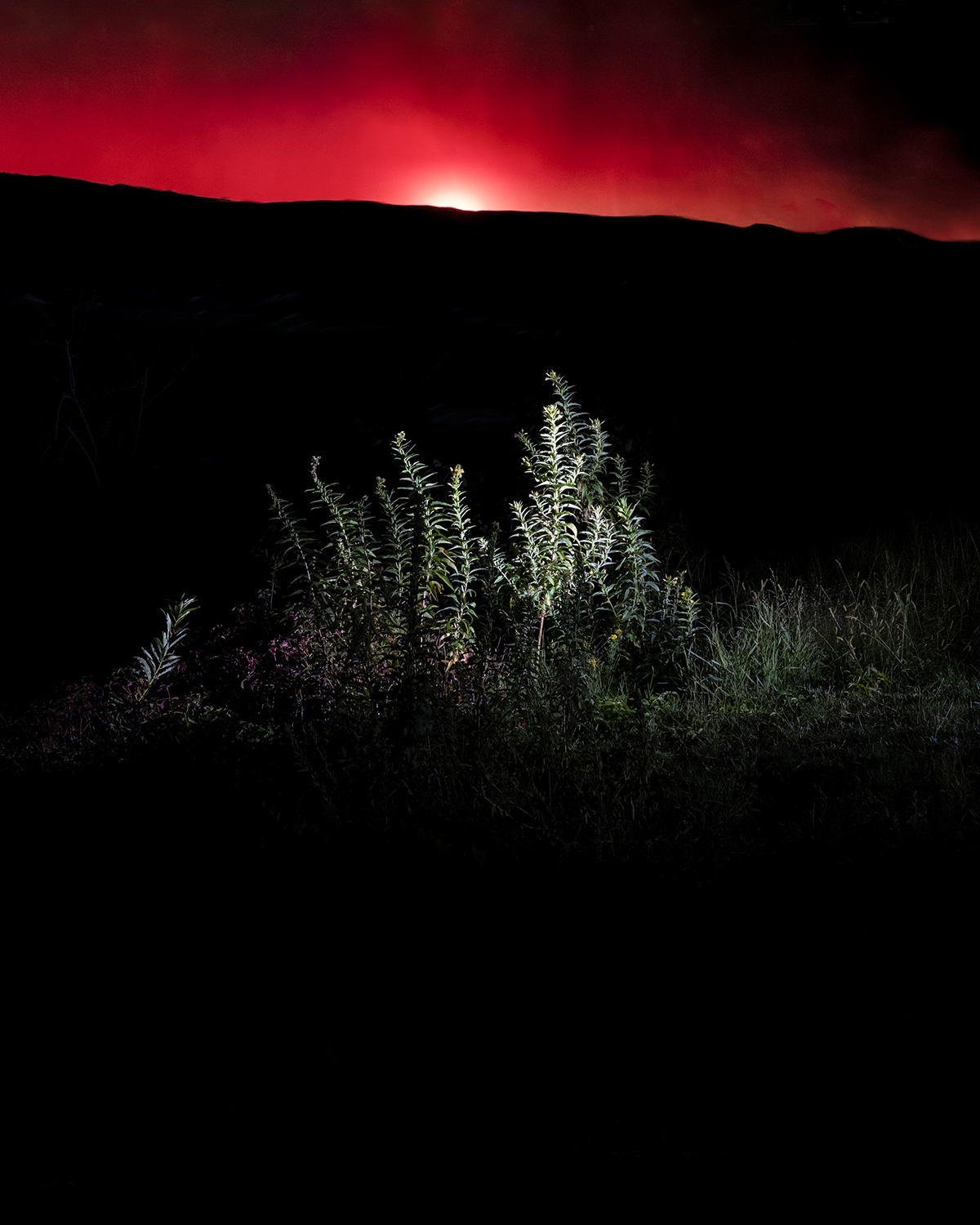Plants highlighted in the night, amidst darkness and a red sky.