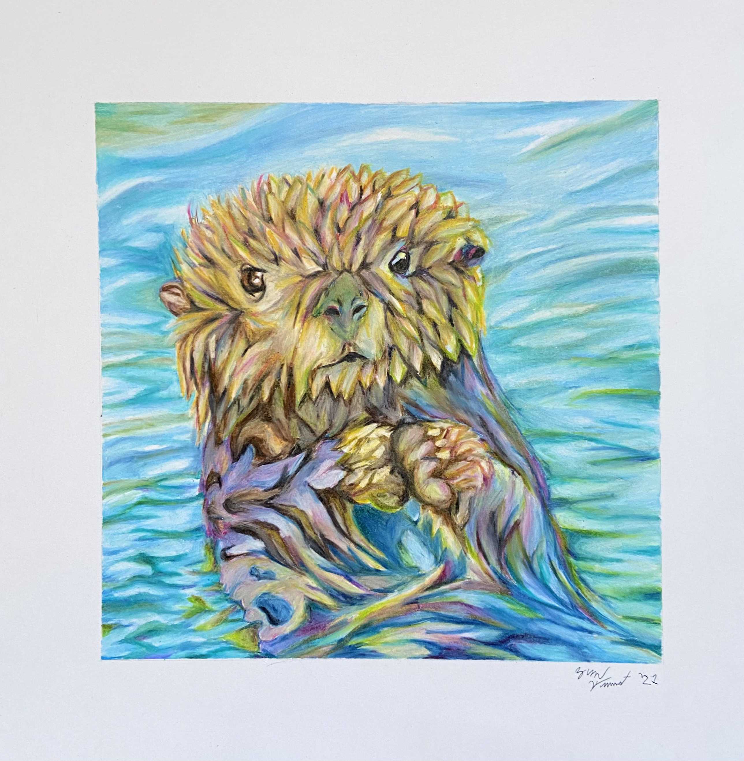 An illustration of a sea otter.