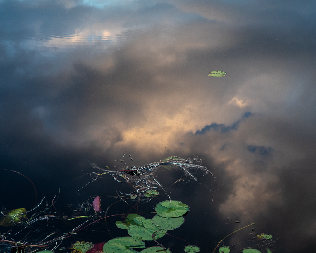 A photo of lily pads and twigs float on water, which is reflecting a cloudy sky.