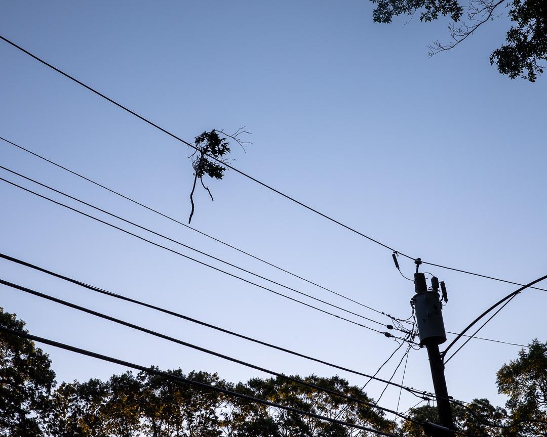A leafy twig stuck in a power line.