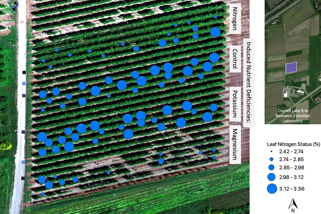 overhead view of field with blue dots of varying sizes indicating leaf nitrogen status.