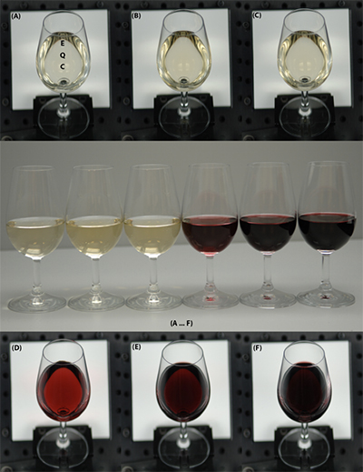 comparison of red and white wines