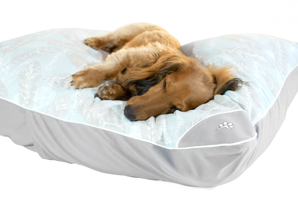 Dog resting on a small dog bed