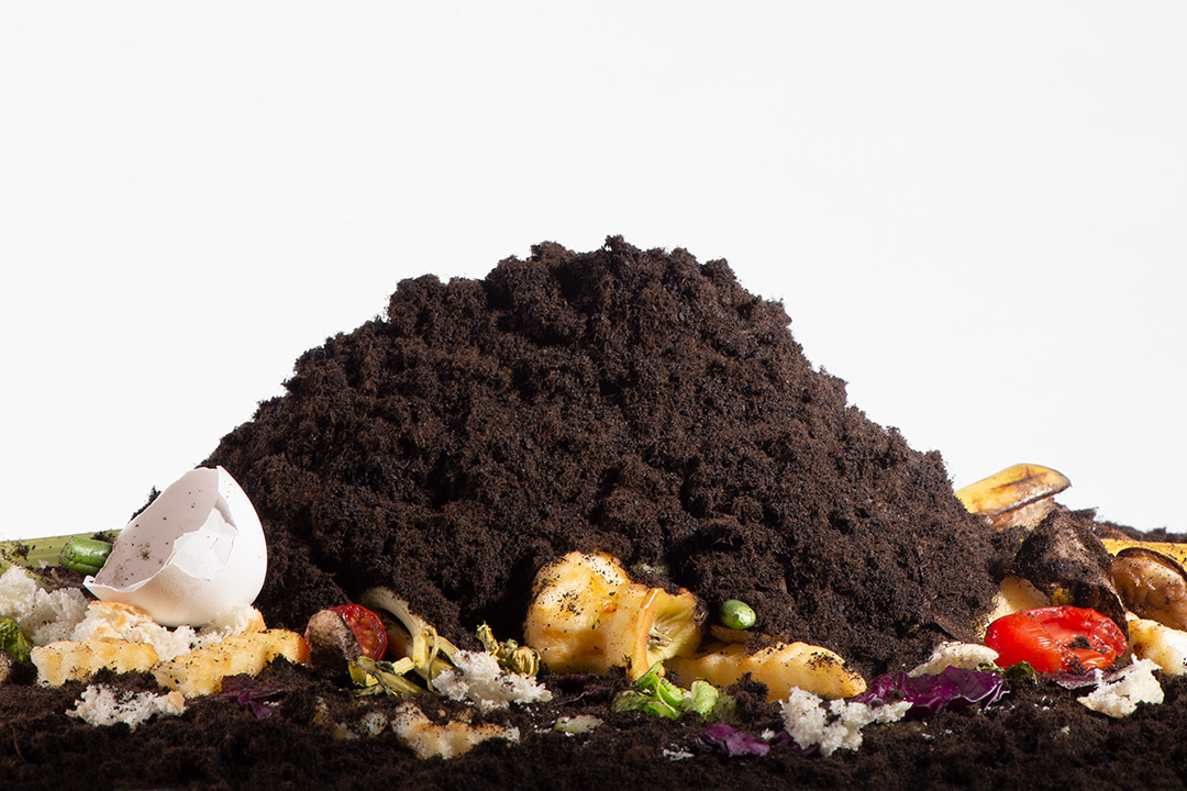 Food scraps and pile of dirt.
