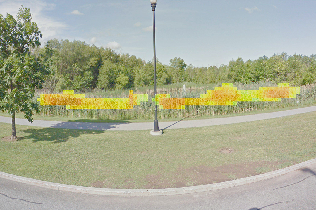 A marsh next to a roadside with green, yellow and orange blocks superimposed over plants.