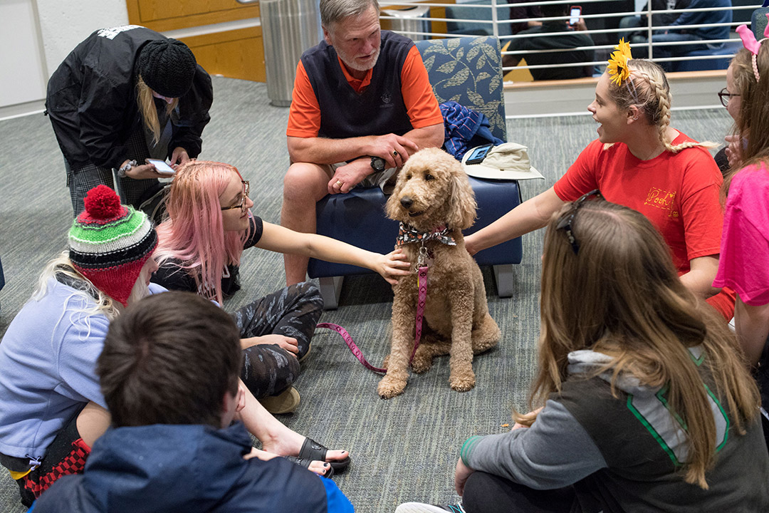 'students surround golden-doodle therapy dog.'
