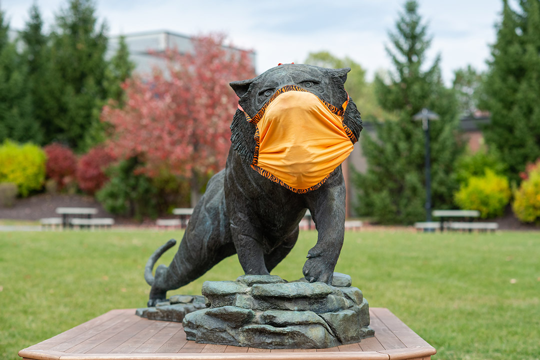 tiger statue wearing an orange cloth face mask.