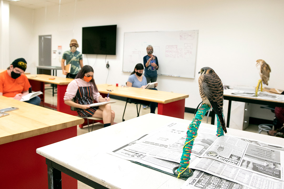 students drawing live birds.