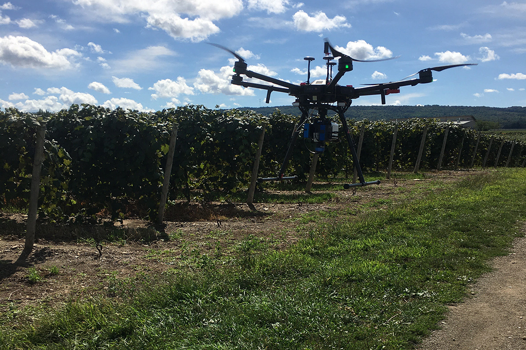 of a drone flying over a vineyard.