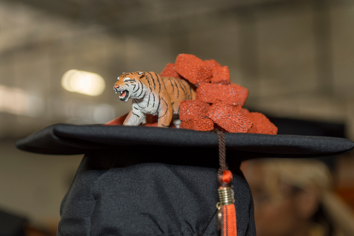 graduation cap with tiger toy and fake orange bricks.