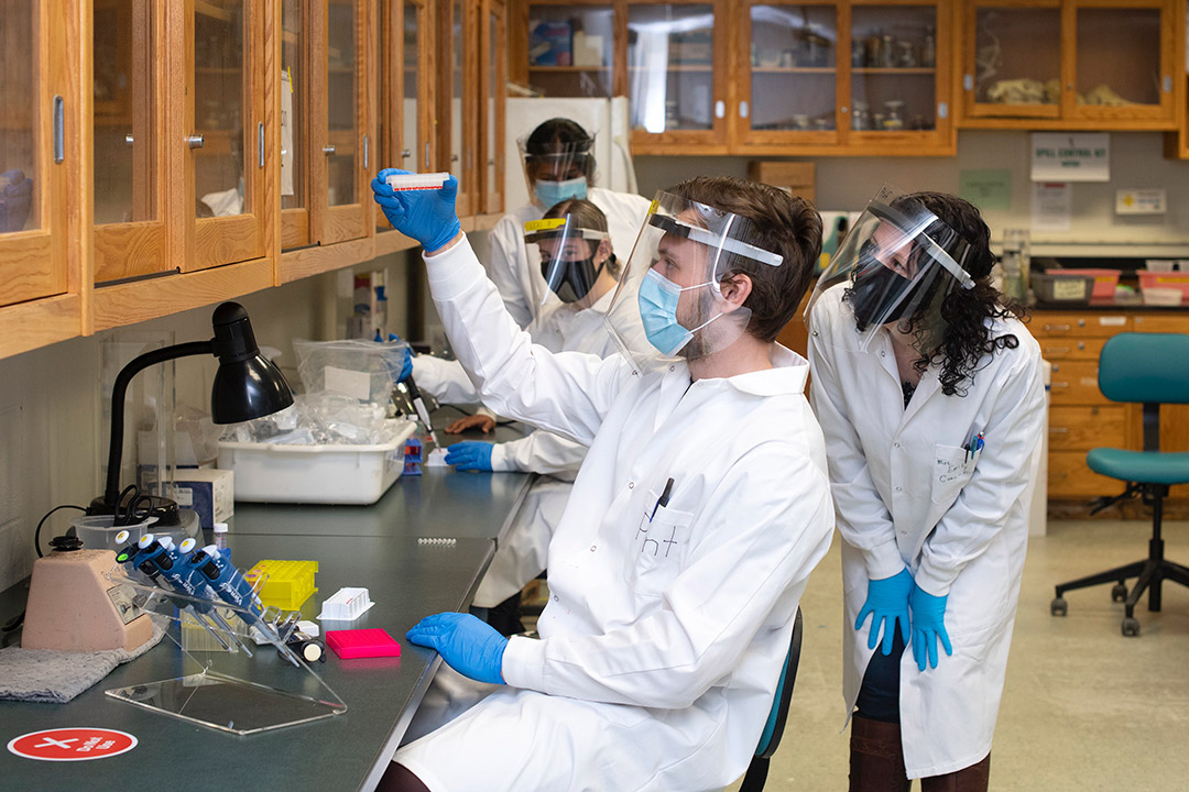 four researchers wearing PPE looking at a sample in a petri dish.