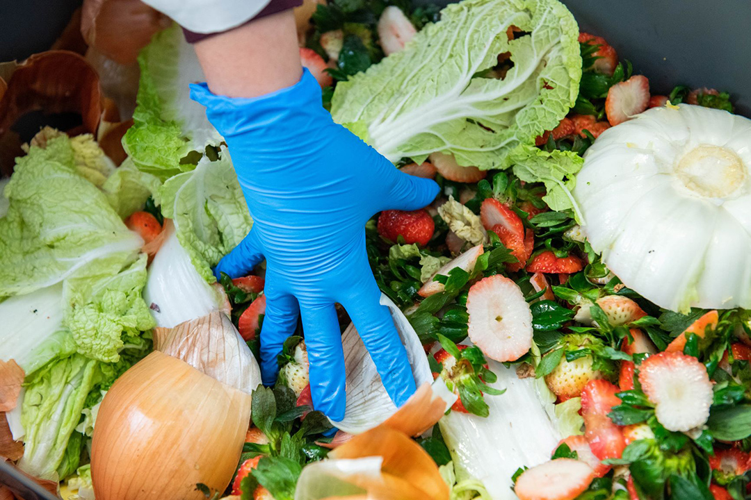gloved hand touching pile of fruit and vegetable food waste.
