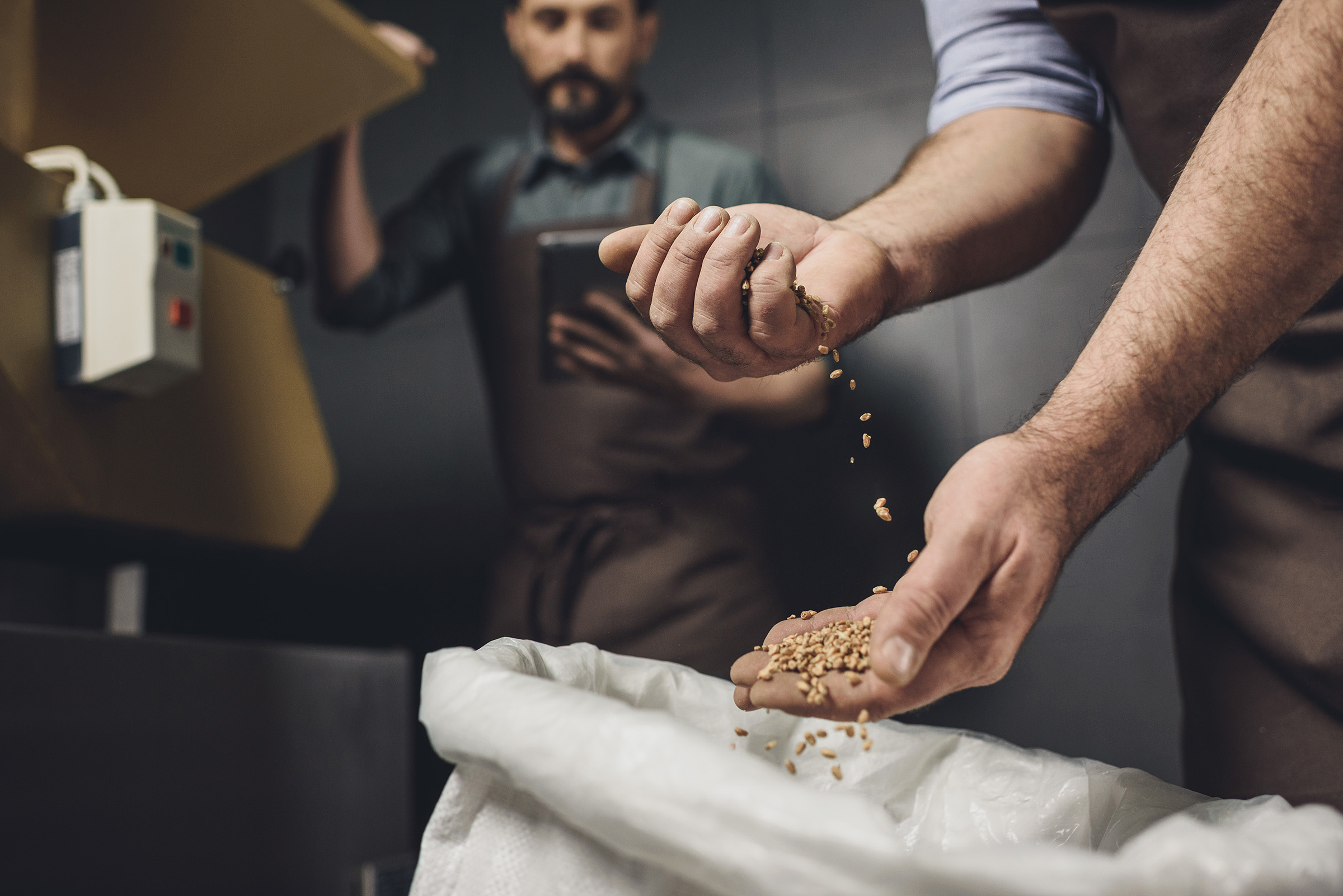 Brewer filtering grains in his hand