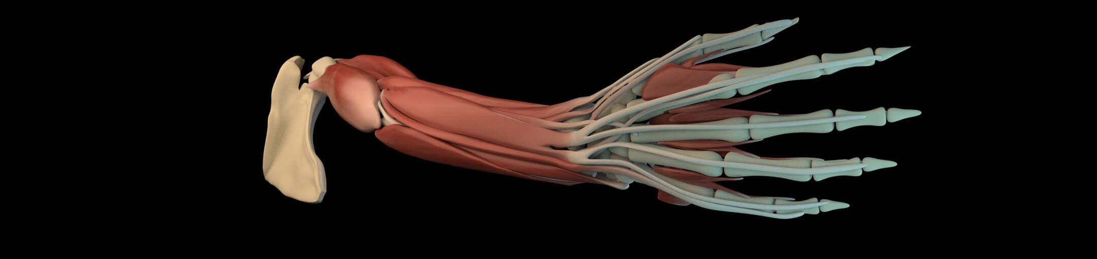 Medical Illustration BFA | Rochester Institute of Technology