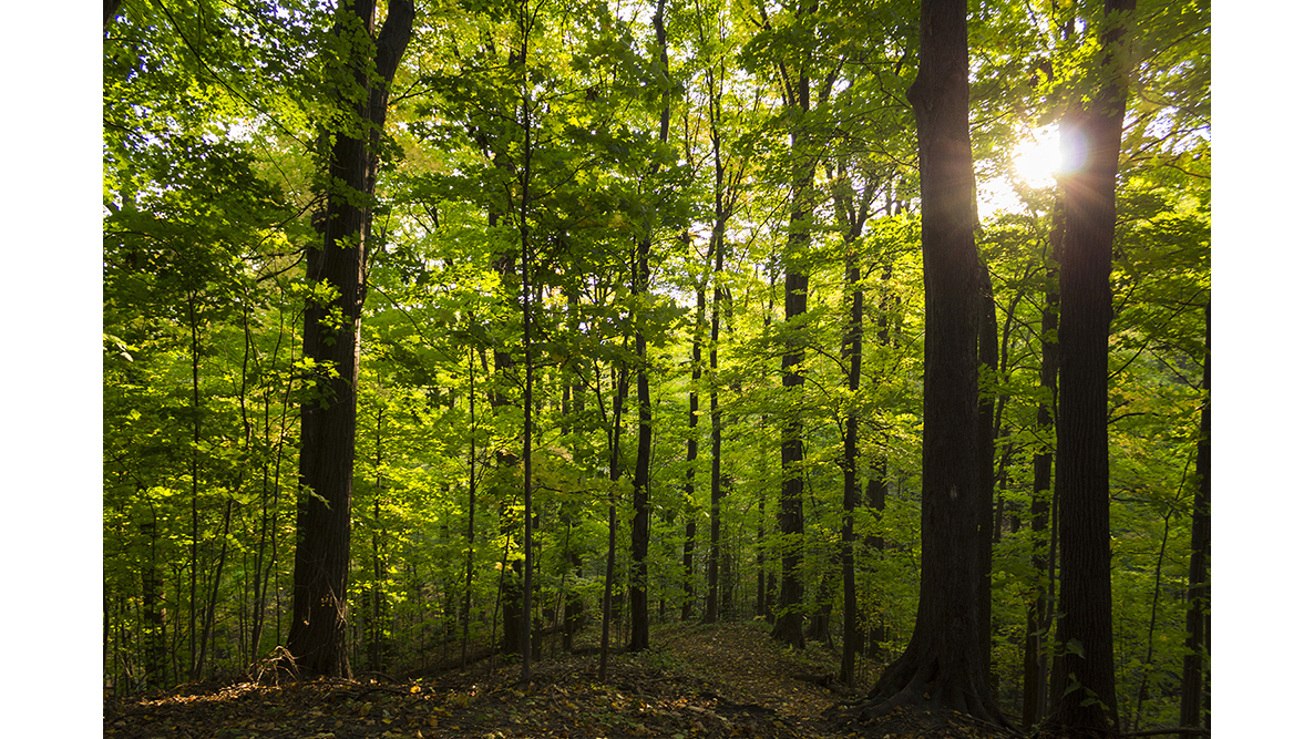 A photo of trees in the woods