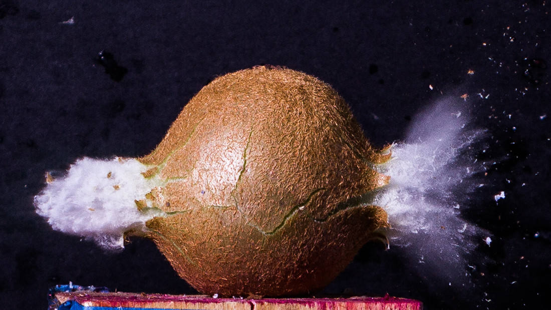 A photo of a bullet going through a kiwi.
