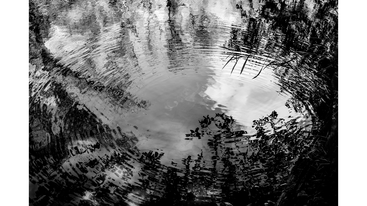 A black and white photo of trees reflecting in water