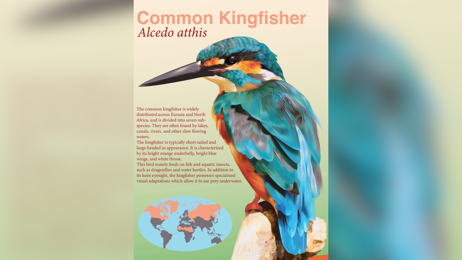 An illustration of a common kingfisher bird.
